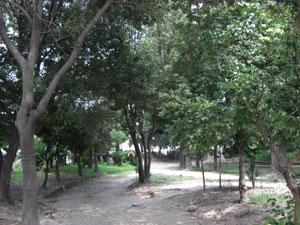 大井戸公園の木陰